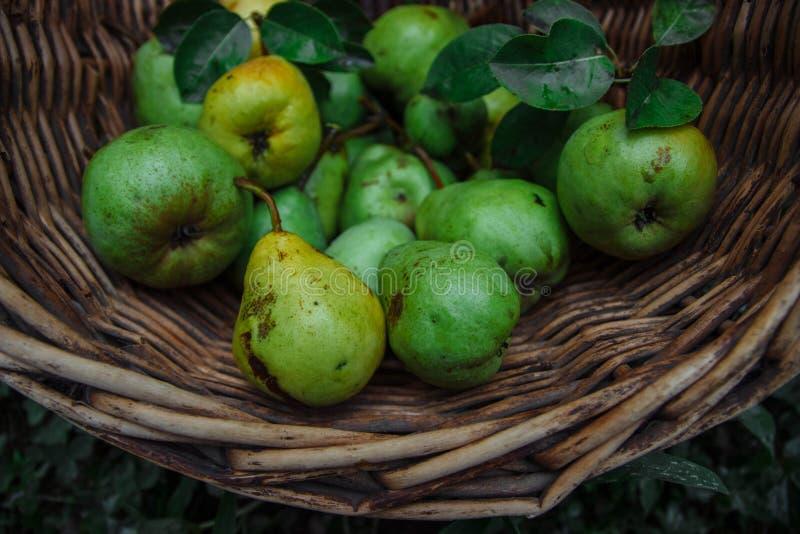 Smakelijke en gezonde oogst stock foto's
