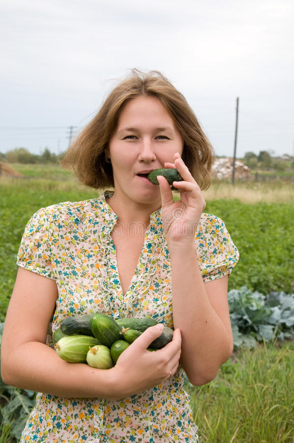 Smakelijke oogst stock afbeeldingen