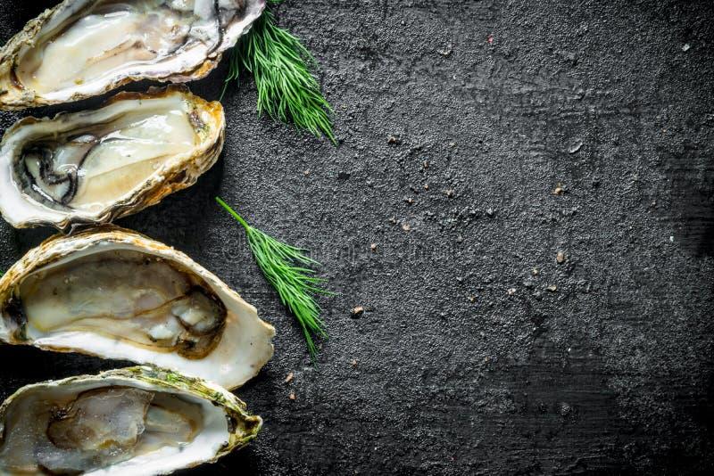 Smakelijke ruwe oesters met dille stock foto's