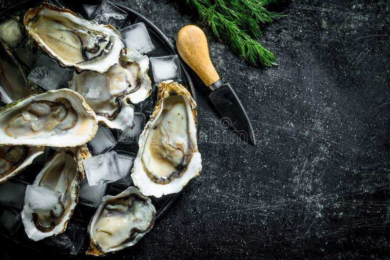 Smakelijke ruwe oesters met ijsblokjes en een mes stock afbeelding