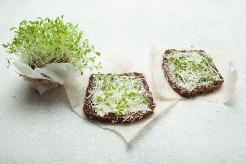 Smakliga mellanmål med gräddost- och grönsakmikrogräsplaner vegetariska sunda smörgåsar royaltyfri bild