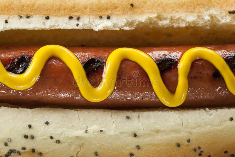 Smakosz Piec na grillu Wszystkie wołowiny Hots psy zdjęcie royalty free