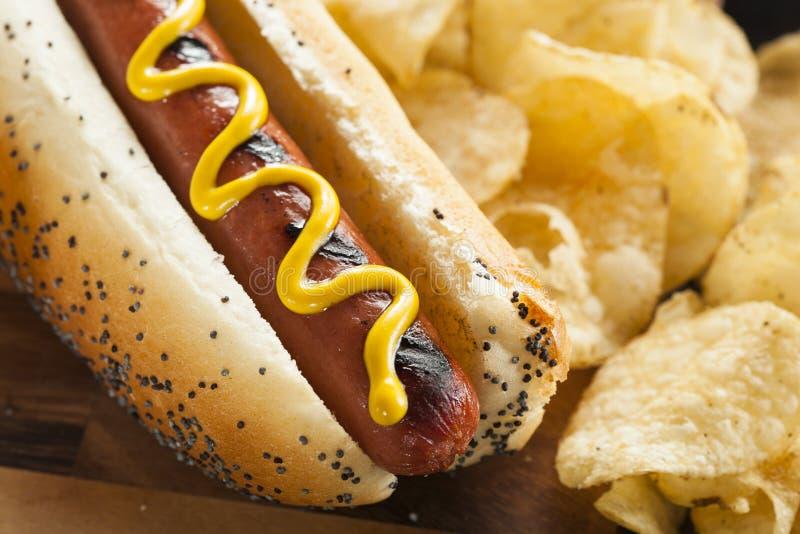 Smakosz Piec na grillu Wszystkie wołowiny Hots psy obraz royalty free