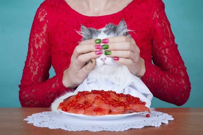 Smakowita niespodzianka dla kota obrazy stock