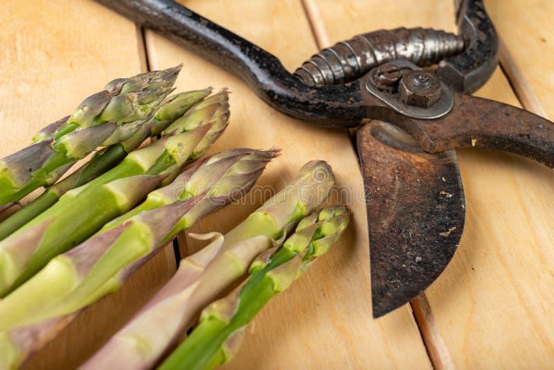 Smakowity asparagus ?wie?o podnosz?cy od domu ogr?du Warzywa przygotowywaj?cy w domowej kuchni obraz stock