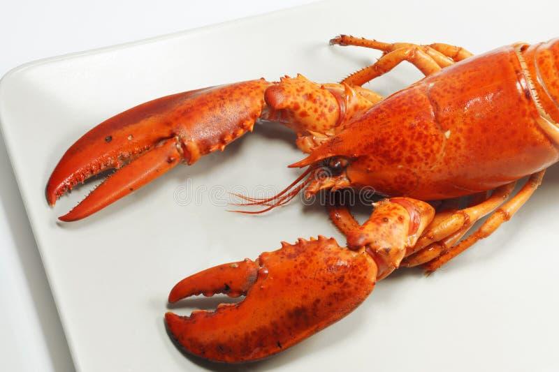 Smakowity i wy?mienity naczynie ?wie?y ameryka?ski homar, ca?a sylwetka na lekkim tle obraz royalty free