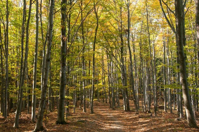 Smal bana i en tät höstskog i sydliga Polen royaltyfria foton