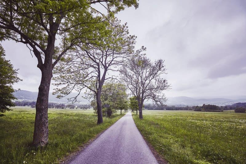 Smal landsväg på en regnig dag fotografering för bildbyråer