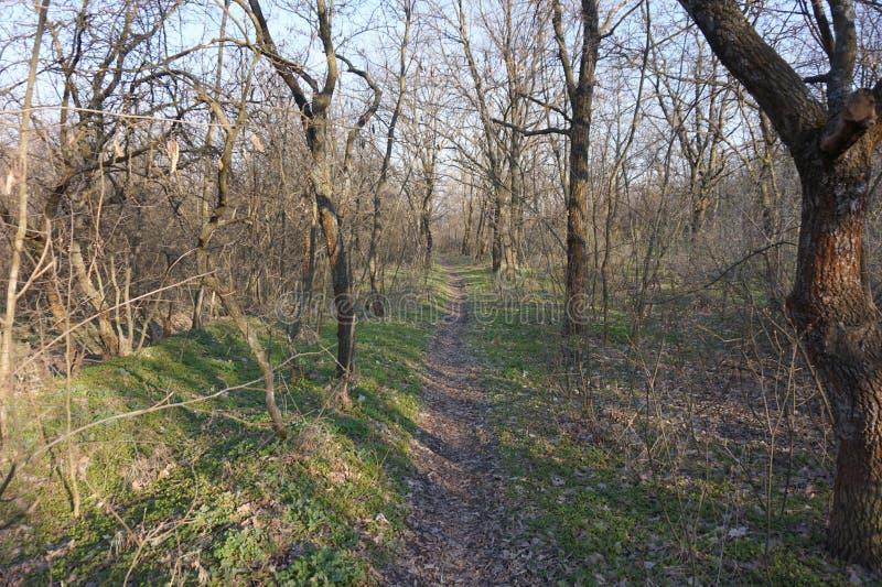 Smal skog för bana på våren fotografering för bildbyråer