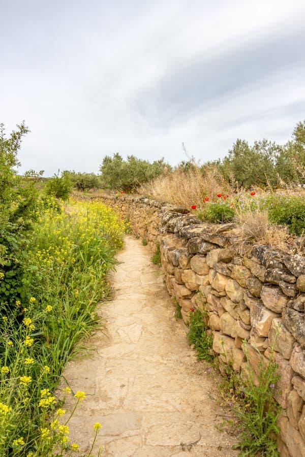 Smal vandringsled längs ett stenstaket på vägen av St James, Camino de Santiago i Navarre, Spanien, rutt Maneru-Cirauqui arkivfoto