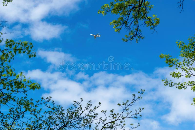 Small aircraft, private jet, traveling across a beautiful blue sky on a sunny day, with leaves and tree branches in the. Small aircraft, private jet, traveling stock image