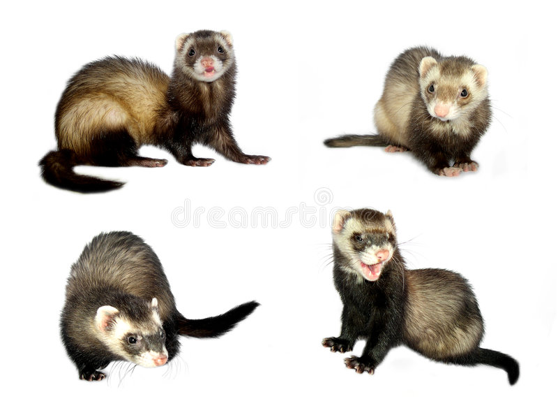 Small Animals [Isolated] royalty free stock image