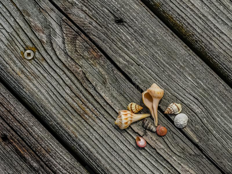 An Assortment of Seashells on a Weathered Dock. Small, assorted seashells lying on a background of a weathered wooden dock royalty free stock images