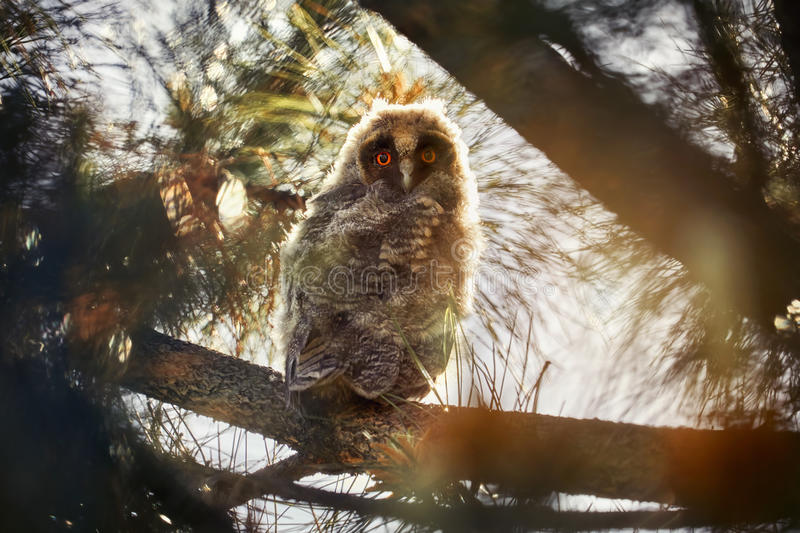 Small baby owl in the forest royalty free stock photo