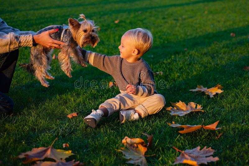 Small baby toddler on sunny autumn day walk with dog. Warmth and coziness. Happy childhood. Sweet childhood memories royalty free stock images