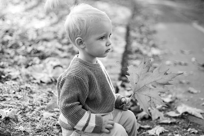 Small baby toddler on sunny autumn day. Warmth and coziness. Happy childhood. Sweet childhood memories. Child autumn. Leaves background. Warm moments of autumn stock photo