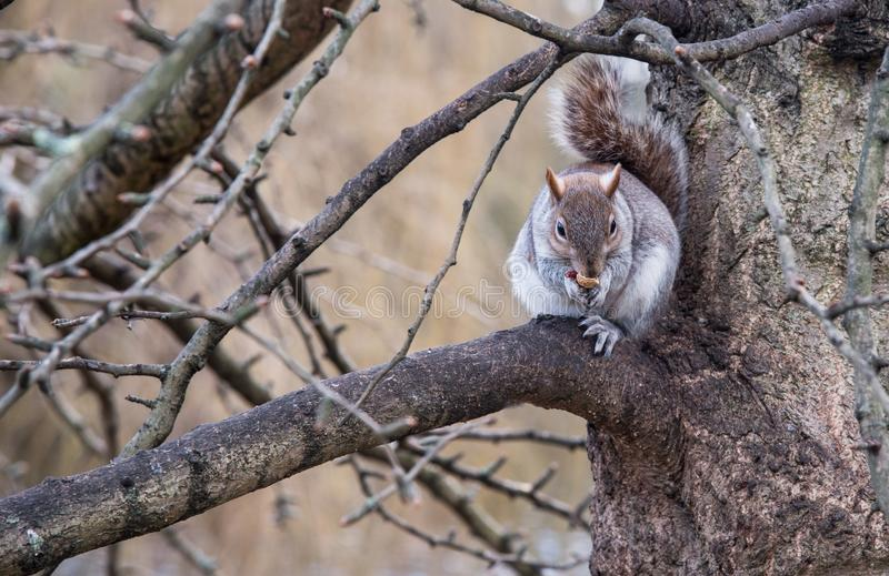 Small beautiful cute squirrel sitting on tree branch. stock image