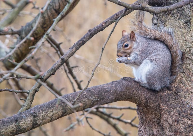 Small beautiful cute squirrel sitting on tree branch. stock photos