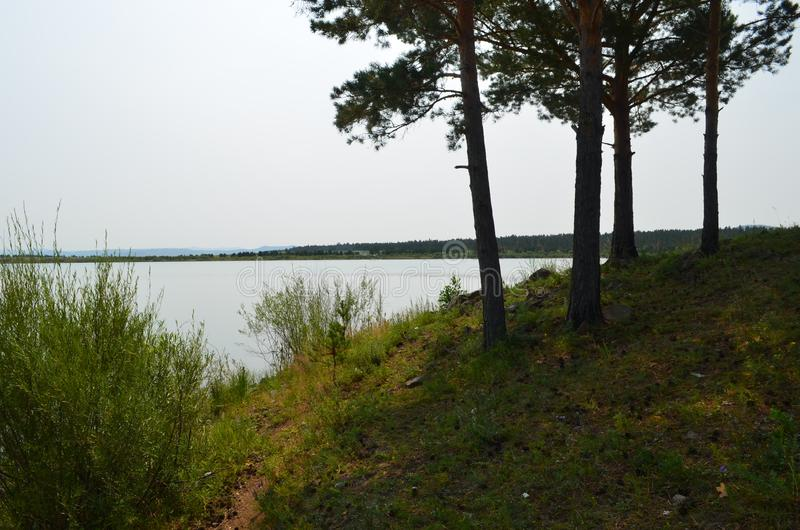 A small beautiful forest lake with picturesque vegetation, a great place for secluded relaxation. Siberian landscape with a lake, pine forest, sky. A small royalty free stock photos