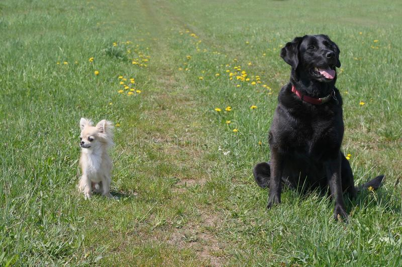 Small and big dog royalty free stock photography