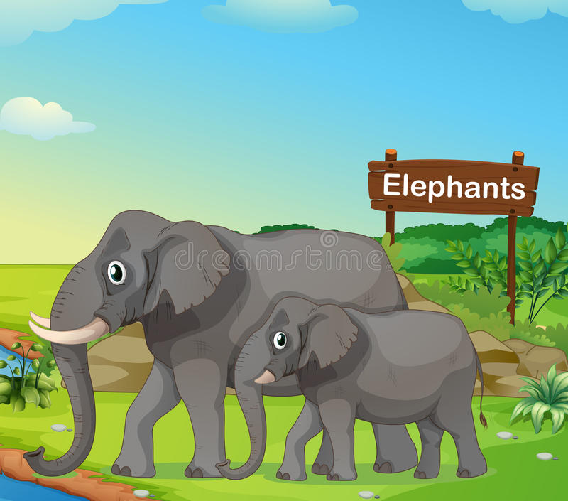 A small and big elephant with a signboard. Illustration of a small and big elephant with a signboard vector illustration