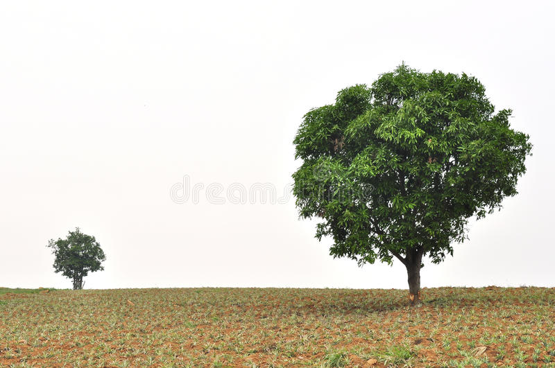 A small and big tree with new leaf growth