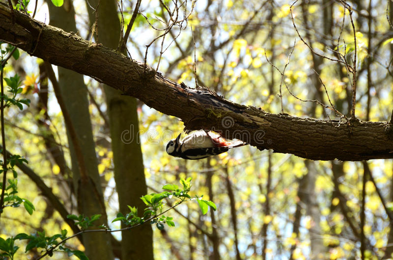 Small bird on branch royalty free stock photo