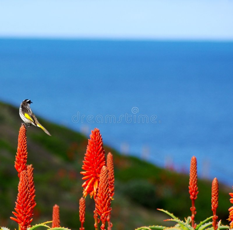 Small Bird And Cactus Flowers Stock Image