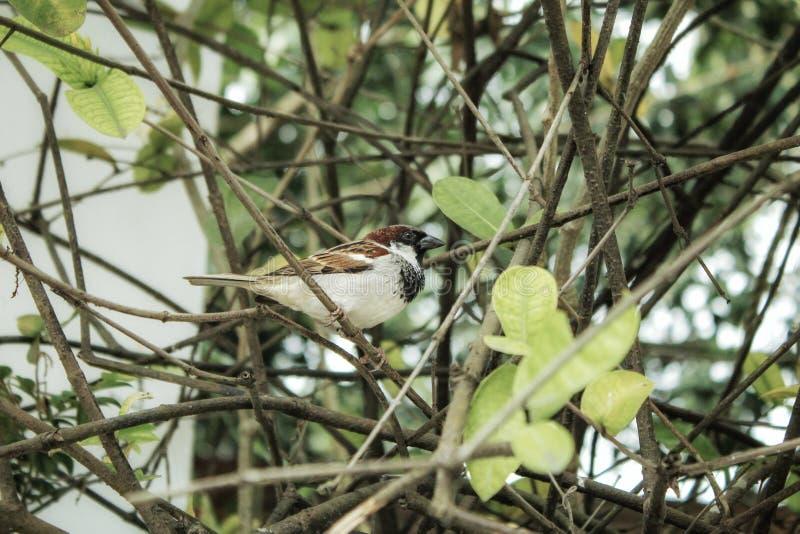 A small bird. Canon 1300d click royalty free stock image