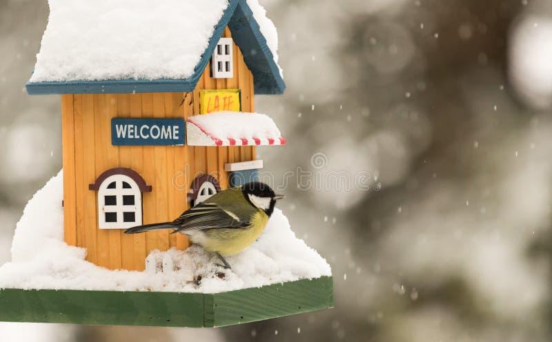 Small bird by a feeding house. Small bird standing and eating by a feeding house royalty free stock image