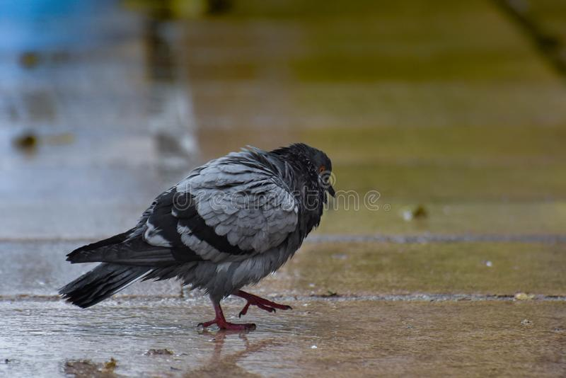 Small bird looking for food royalty free stock photos