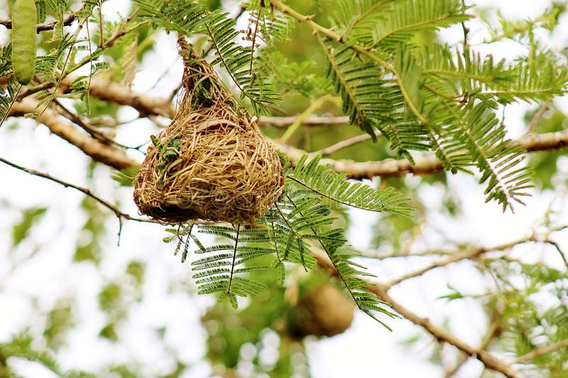Small bird nest on the tree royalty free stock photography