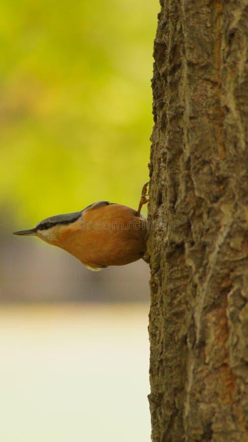 Small bird royalty free stock photo