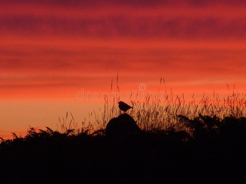 Small bird on rock and grasses silhouetted against the setting sun royalty free stock images