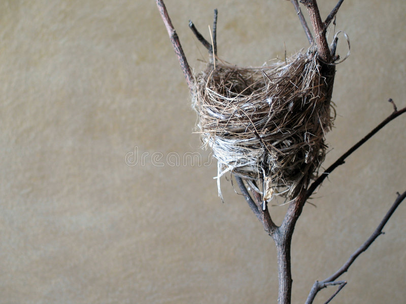 Download Small bird's nest. stock photo. Image of nature, branches - 107828
