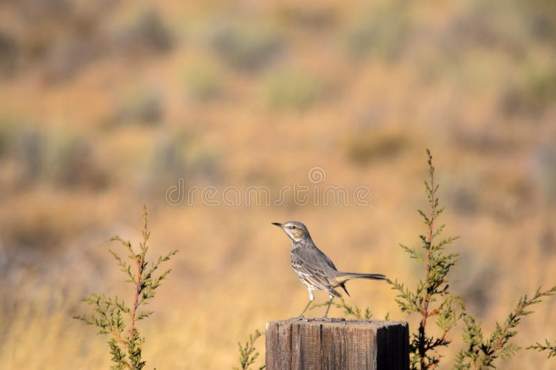Bird on a Post in a Field stock images