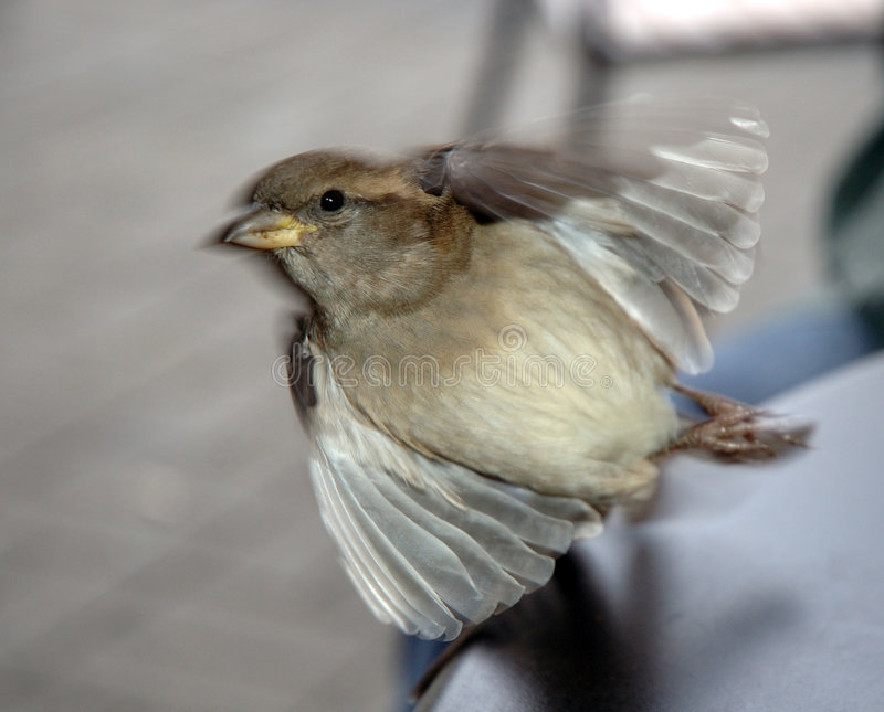 Small Bird Taking Off stock photography