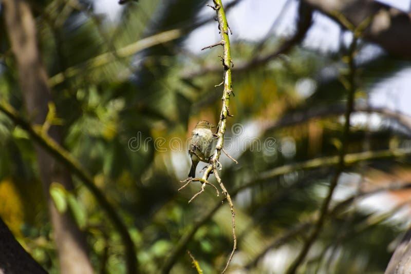 Small Bird on a tree on a warm sunny day royalty free stock photo