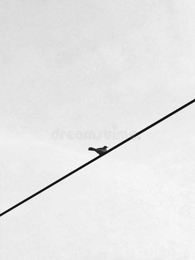 A small bird on a wire royalty free stock photography