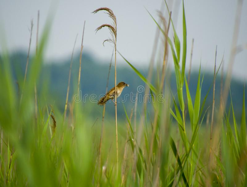 Small bird with worm on grass royalty free stock photo