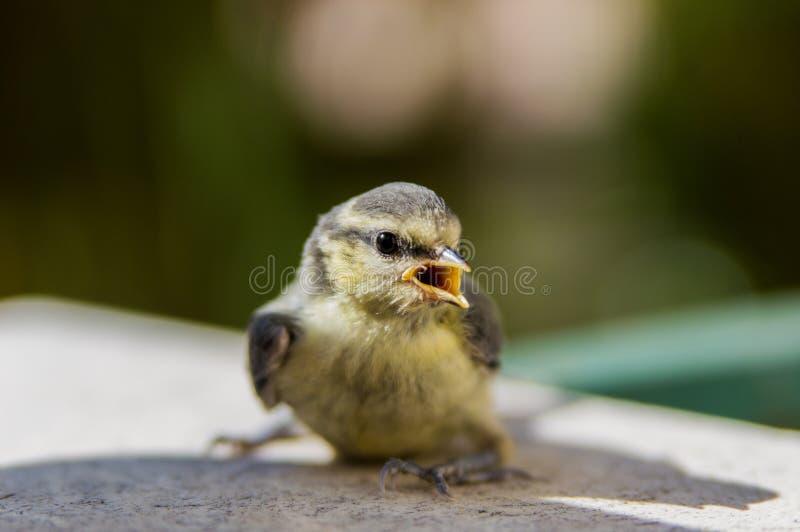 Small bird with yellow open beak in sunny summer day stock photos