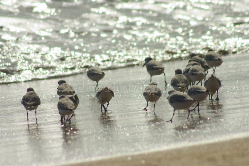 Download Small birds stock image. Image of morning, feeding, bird - 100919