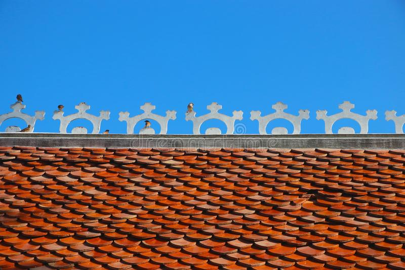 Small birds sparrow holding  on the roof tiles royalty free stock images