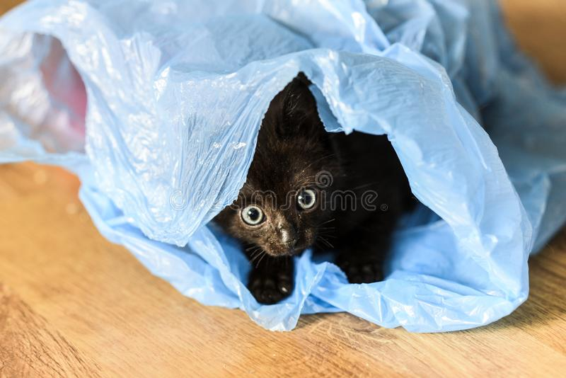 A small black cat playing in a plastic blue bag stock photo
