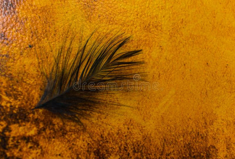 Black feather on leather background royalty free stock image