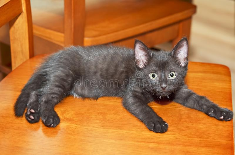 Small black kitten lies on chair and looks. Selective focus stock photo