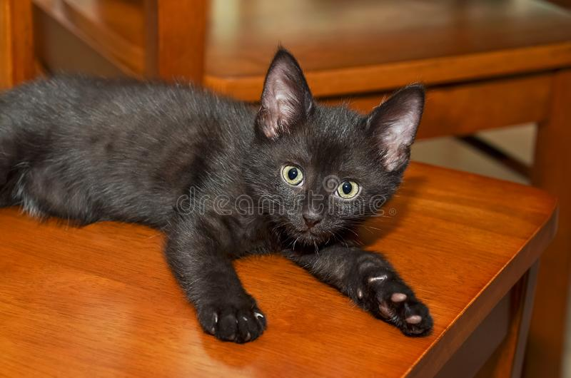 Small black kitten lies on chair and looks. Selective focus stock photos