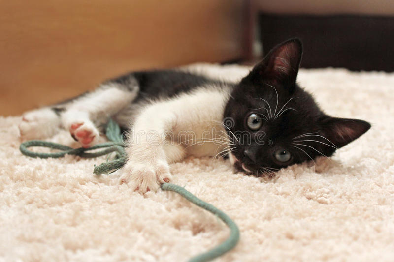 Small black and white kitten bites toy ball stock photos