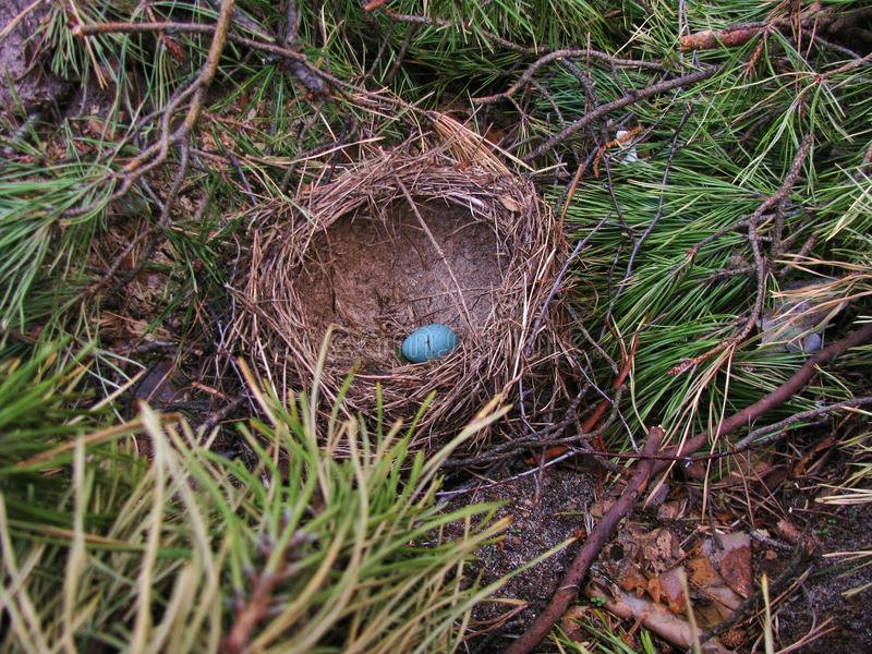 Small blue egg stock photography