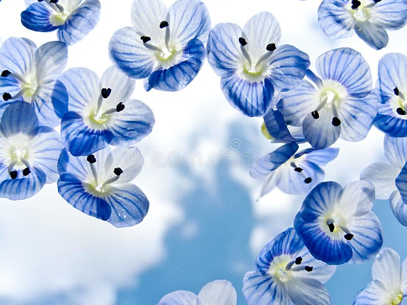 Small blue flowers and blue sky stock photos